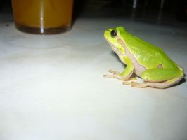Frog at table by Phyridis
