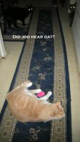 Lolcats Entry 001 by Wolfpack5554