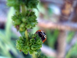Ladybird appearing by Naynee75