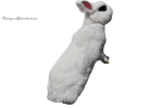 White Rabbit PRECUT PNG Stock by Tris-Marie