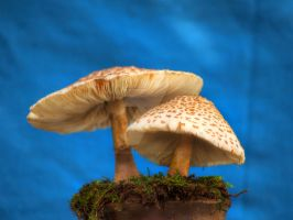 HDR Mushrooms 7 by Dracoart-Stock