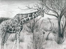 Giraffe for Anna by Lycanthrope818