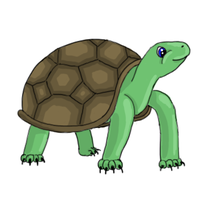Turtle by RCR123