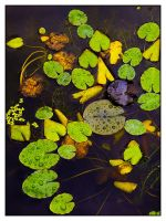 Pond Life by Mohain