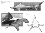 Warm Up Sketches- Hammerhead Shark by Atropicus