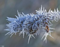 Frosty morning 6 by Nini1965