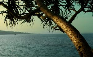 Pandan Leaves By The Sea by wilmil