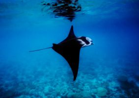 Flying in the sea by LazyDugong