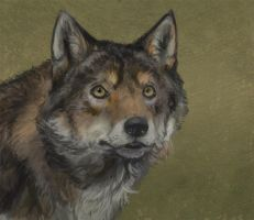 Wolf Study by Eliket