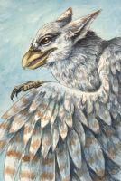 Grey Griffon by Flowerlark