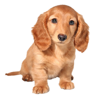 So cute dogy PNG by Laki10