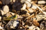 Tiny grasshopper in the winter by CyclicalCore