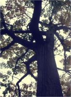 Bushnell Tree by Gibmee
