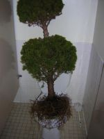 Toilet-Tree by Feenster64