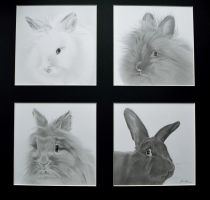 Commission - Four rabbits by Captured-In-Pencil
