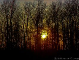 lighted forest by ogiedomane