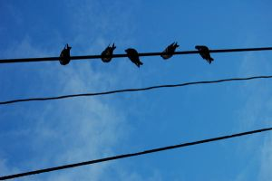 Pigeons on a Wire by J-s-K-Photography