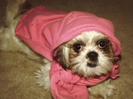 Little Pink Riding Hood by JohnnyNiffer