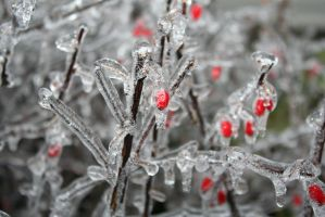 Frozen Berries by wolfphotography