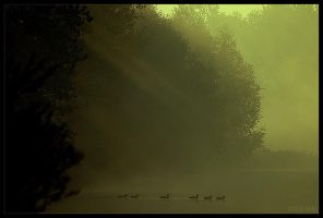 a walk in  the rays by werol