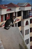 On the Edge by DrkHrs