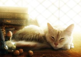 Wizard's familiar by tamaraR