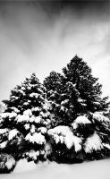 Snowy Trees by P3MBY