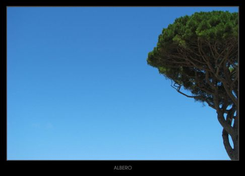 ALBERO by theconcept