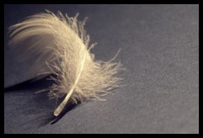 feather by dreamluv