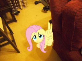 fluttershy behind my sofa hide and go seek by jetrixwolf