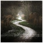 The white path ... by MOSREDNA
