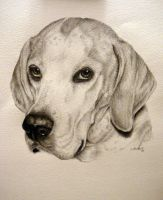 English Pointer- Commision by xx-ashley