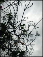 Rain Twigs by dhartinis