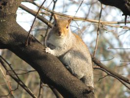 Squirrel_2 by Cam-s-creations