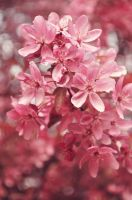 Pink...Much Pink by TayMcKayPhotography