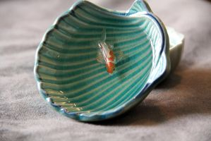 White and Orange Koi in Blue Japanese Shell Bowl by spaceraptor