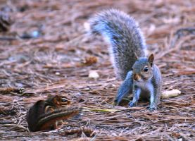 Chippy vrs Squirrel by Tailgun2009