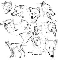 Canid sketchdump by hawberries