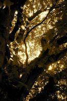 Light through the leaves by Eponine1992