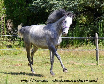 Calabria - Stock 3 by Horses--Stock