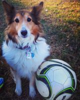 Soccer dog by Canis-Simensis