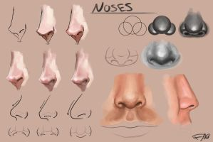 Noses study by FelFortune