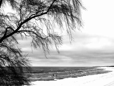 seaside tree.. by kretka