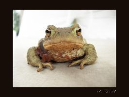 the Toad by SullenSquid