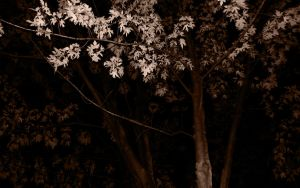 Blood Trees by Snohawk