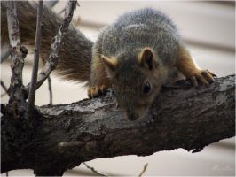 squirrel-serial-3 Finally you are here by sonafoitova