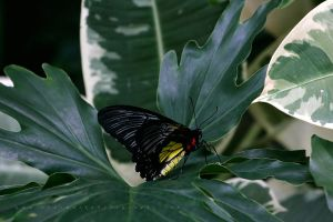 Butterfly 10 by andras120