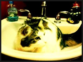 Cat in the Sink by neon-talon-claw
