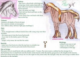 Panyx breed sheet by saphiraly