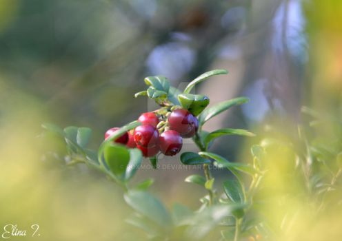 Lingonberry by roxmohr